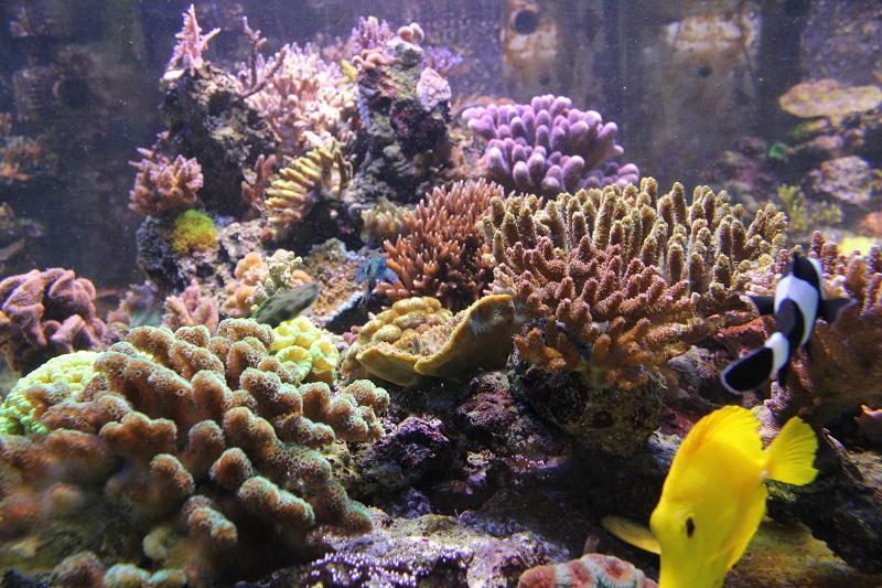 recherche boutures de coraux Img_2936
