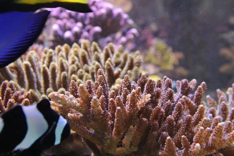 recherche boutures de coraux Img_2938