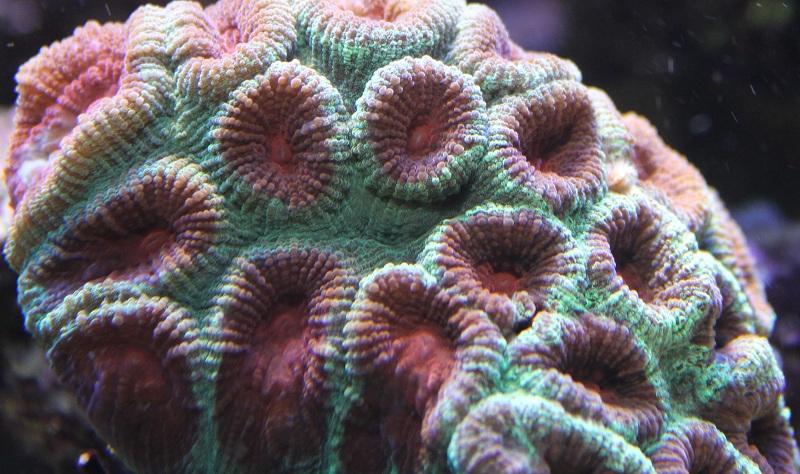 recherche boutures de coraux Img_2941