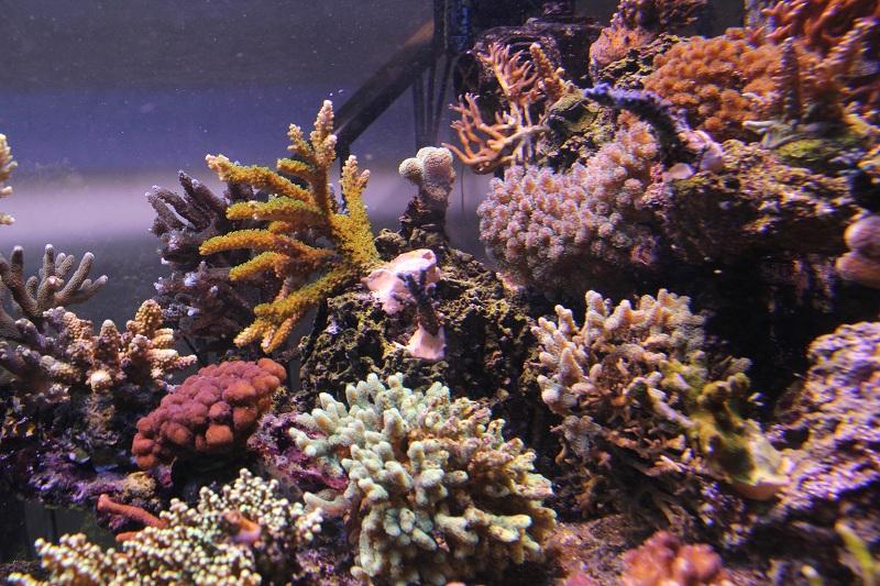 recherche boutures de coraux Img_3017