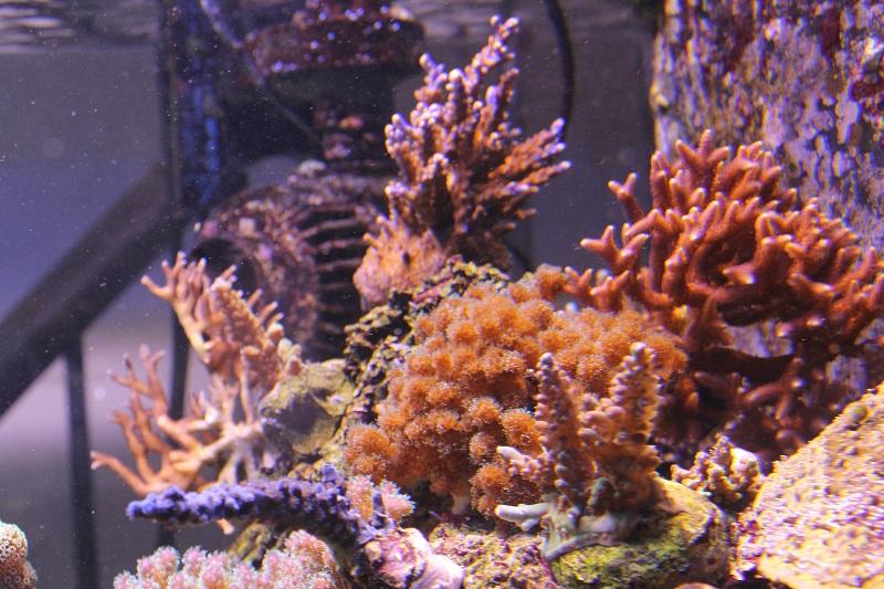 recherche boutures de coraux Img_3018