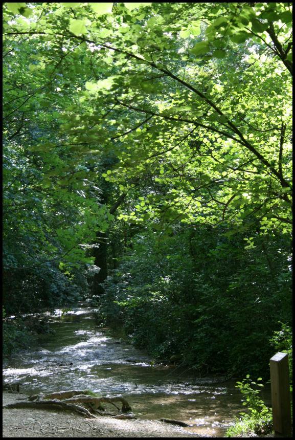 Vallée de St Pons près de Gémenos (13) 20110622