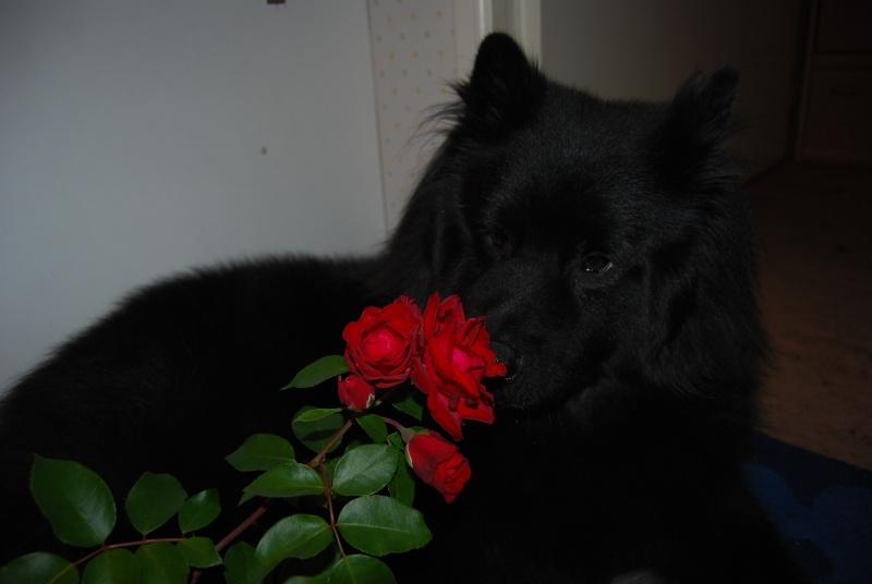 Loulou mon ptit loup, mon ptit Dark ! Dsc_0614