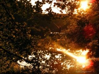 Sonnenstrahl: Forum über emotionalen Missbrauch & emotionale Gewalt