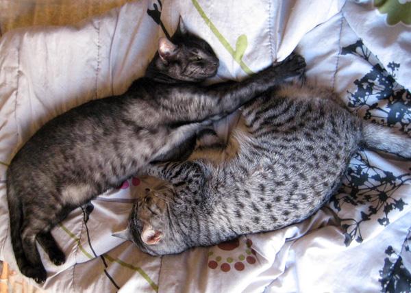 E'Sethi Accuente, le chaton voyageur - Page 4 Befens10