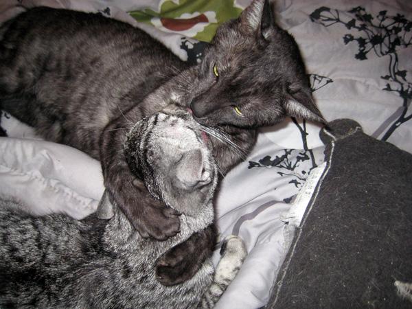 E'Sethi Accuente, le chaton voyageur - Page 4 Befent10