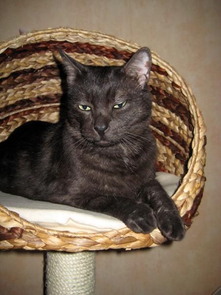 E'Sethi Accuente, le chaton voyageur - Page 5 Romeoa10