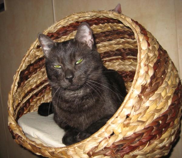 E'Sethi Accuente, le chaton voyageur - Page 5 Romeoh10