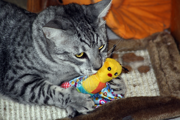 E'Sethi Accuente, le chaton voyageur - Page 5 Sethi-13