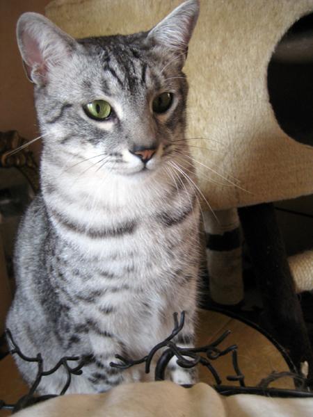 E'Sethi Accuente, le chaton voyageur - Page 4 Sethi210
