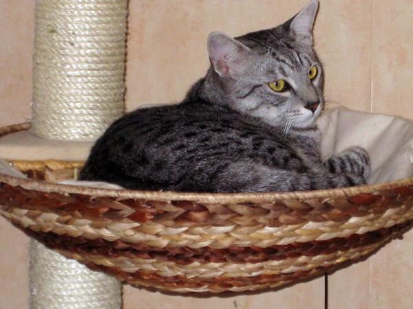 E'Sethi Accuente, le chaton voyageur - Page 5 Sethia10