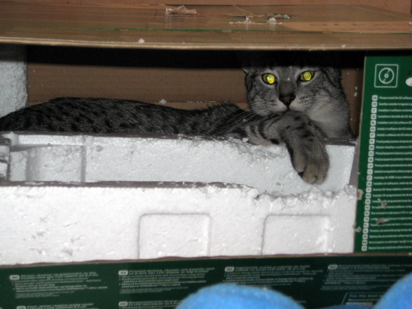 E'Sethi Accuente, le chaton voyageur - Page 4 Sethib10
