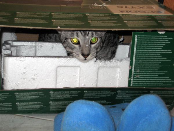 E'Sethi Accuente, le chaton voyageur - Page 4 Sethib11