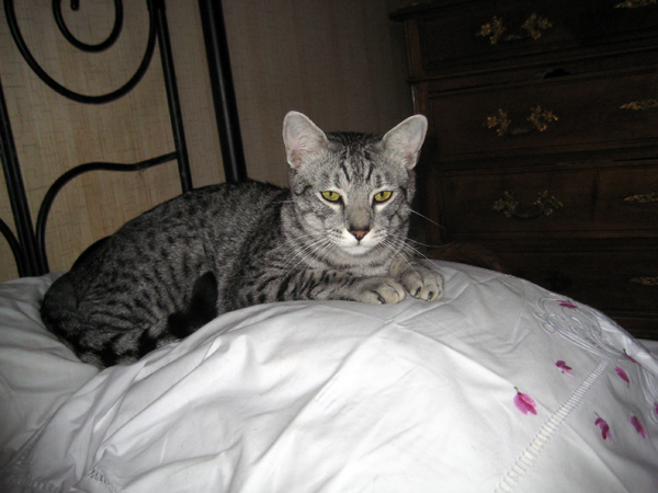 E'Sethi Accuente, le chaton voyageur - Page 5 Sethio10
