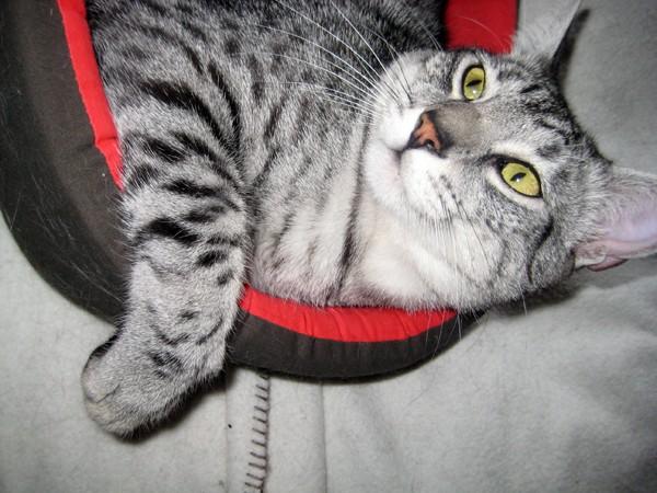 E'Sethi Accuente, le chaton voyageur - Page 5 Sethip11