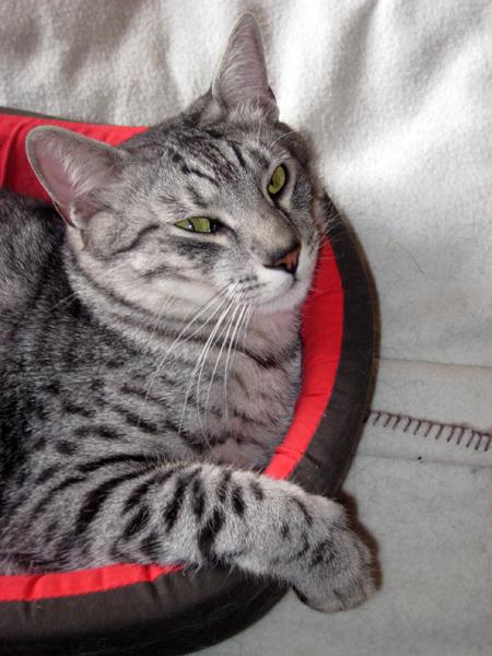E'Sethi Accuente, le chaton voyageur - Page 5 Sethip12
