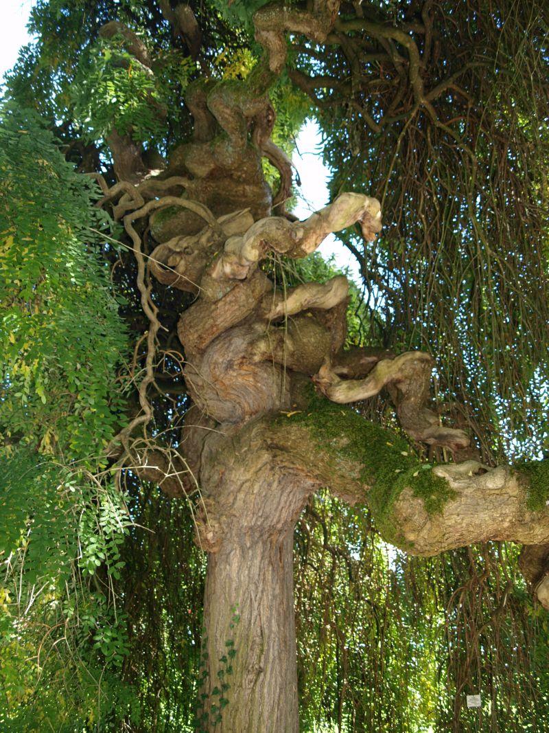 Fotoprojekt - Bäume - Seite 6 Bodens16