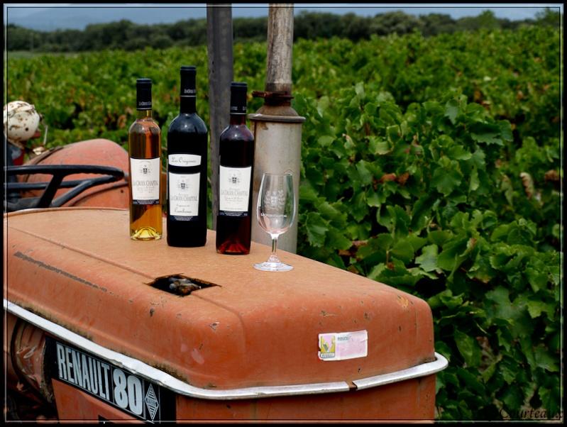 Règle des tiers: 1/3 vin et  2/3 vignes Vigne-10