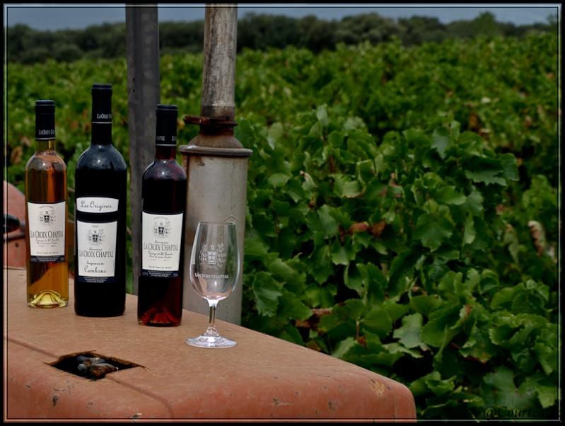 Règle des tiers: 1/3 vin et  2/3 vignes Vignes11