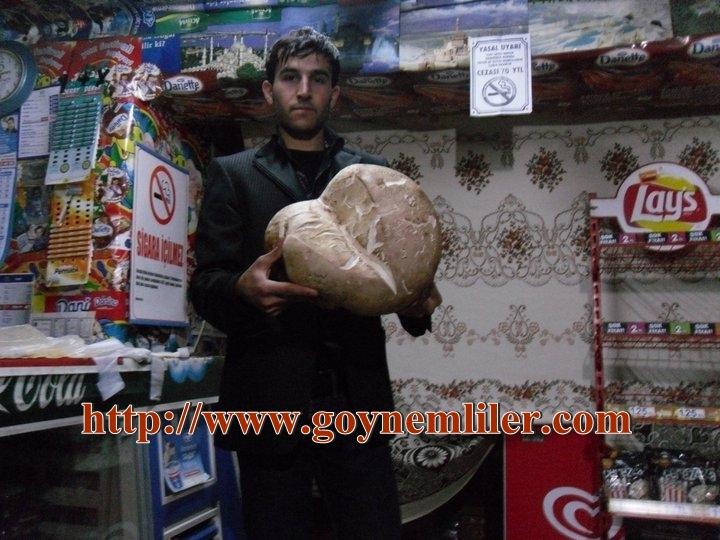 Göynem'de dev mantar bulundu Mantar10