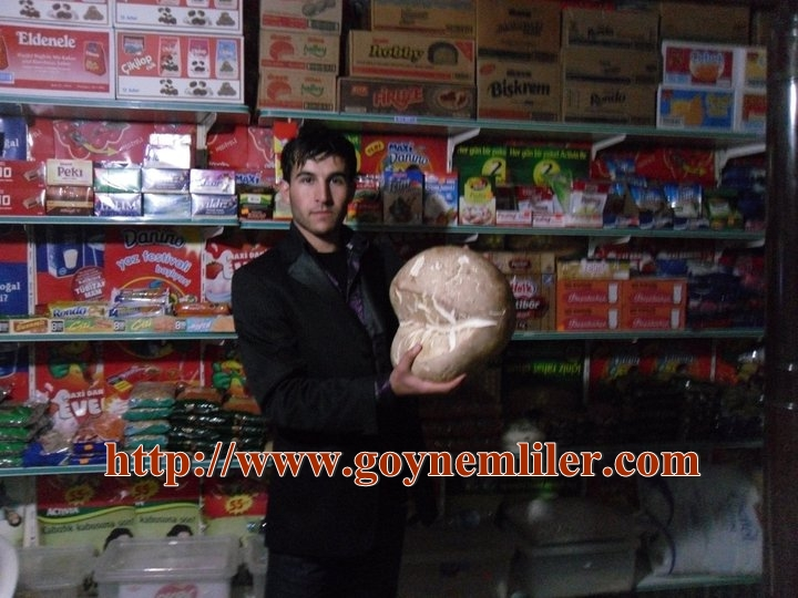 Göynem'de dev mantar bulundu Mantar11