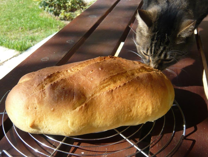 Pain Viennois Chat_p10