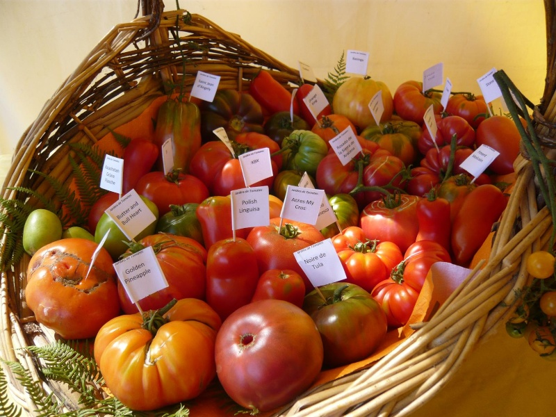 Exposition de tomates Tomate10
