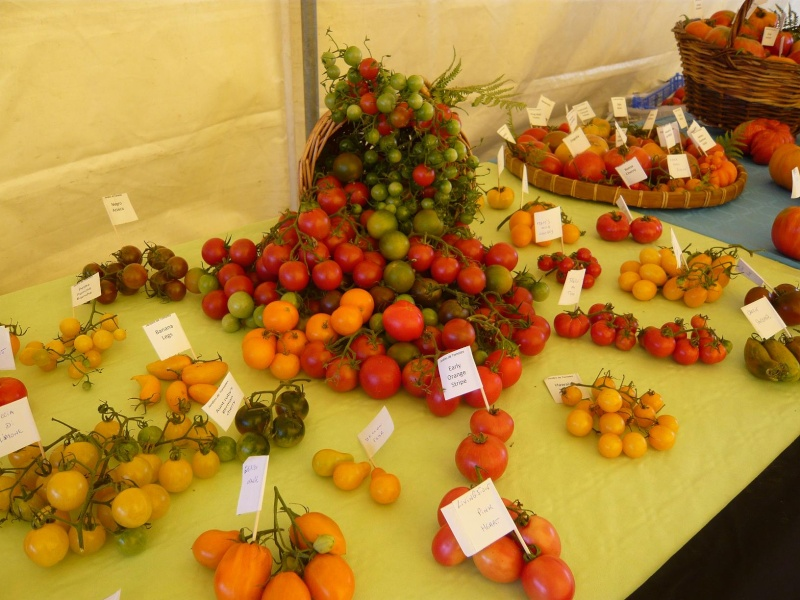 Exposition de tomates Tomate11