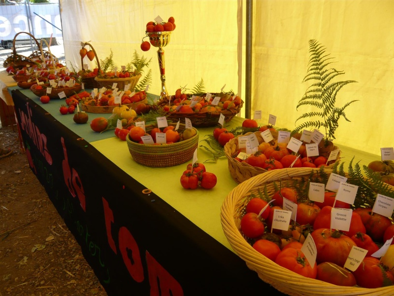 Exposition de tomates Tomate12