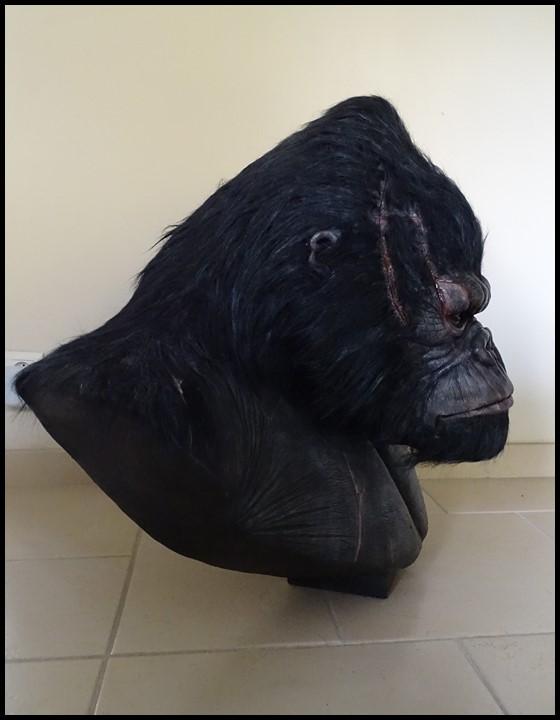 Kong lifesize bust Kong_125