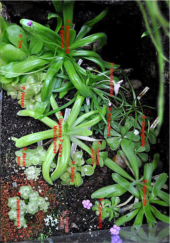 Réalisation d'un terrarium paysagé pour plantes carnivores Bas_pi11