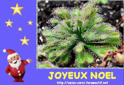 Joyeux Noel 2010 Carte_12