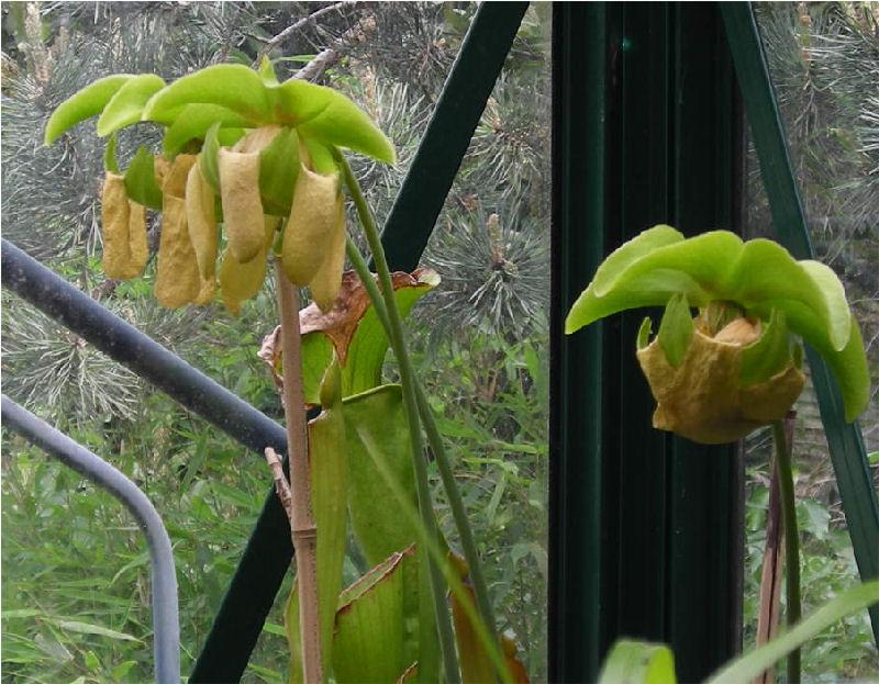 Démarrage printemps 2011 Dscn3411
