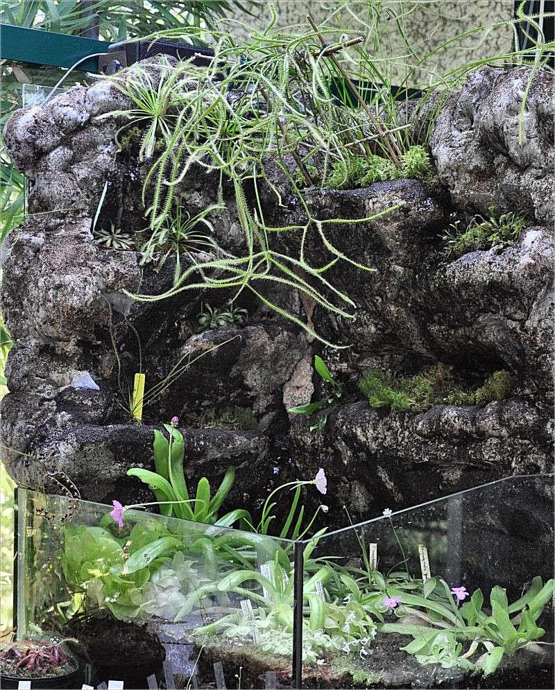 Réalisation d'un terrarium paysagé pour plantes carnivores Mise_e10