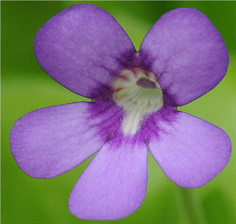 tina en fleur P_tina12