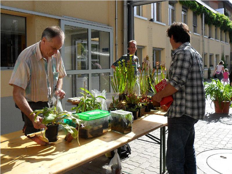 29/05/11 - Bourse aux Plantes Carnivores (et Tropicales) - Jardin botanique de Fribourg - Page 3 Sam_0215
