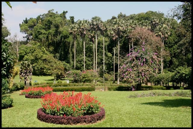 Photos de jardins, parcs, forêts... dans le monde Img_1911