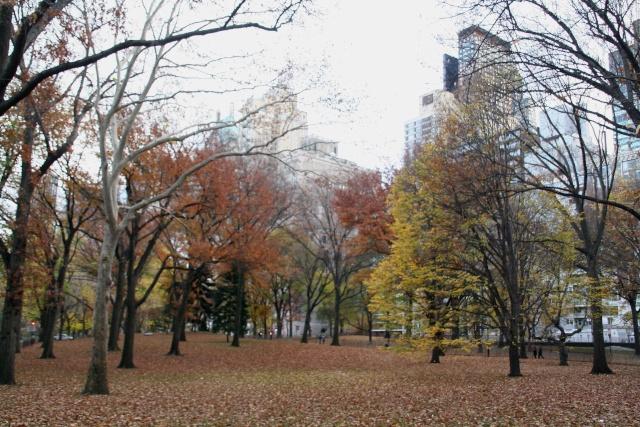 Photos de jardins, parcs, forêts... dans le monde Img_9911