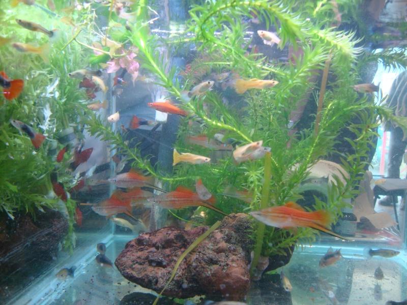 Bourse aux poissons le 10/10/2010 à Montdidier - Page 2 Dsc01532