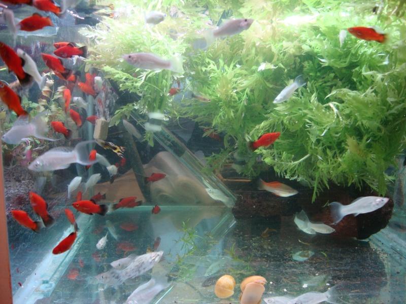 Bourse aux poissons le 10/10/2010 à Montdidier - Page 2 Dsc01533
