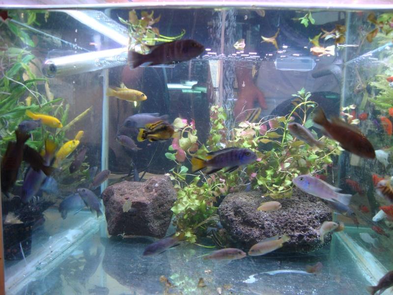 Bourse aux poissons le 10/10/2010 à Montdidier - Page 2 Dsc01534