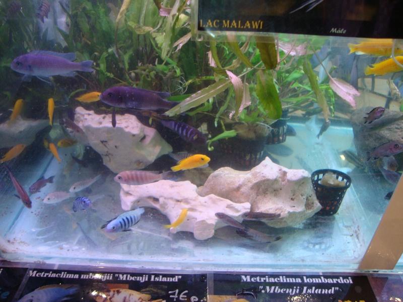Bourse aux poissons le 10/10/2010 à Montdidier - Page 2 Dsc01535
