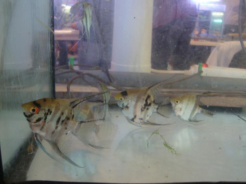 Bourse aux poissons le 10/10/2010 à Montdidier - Page 2 Dsc01537