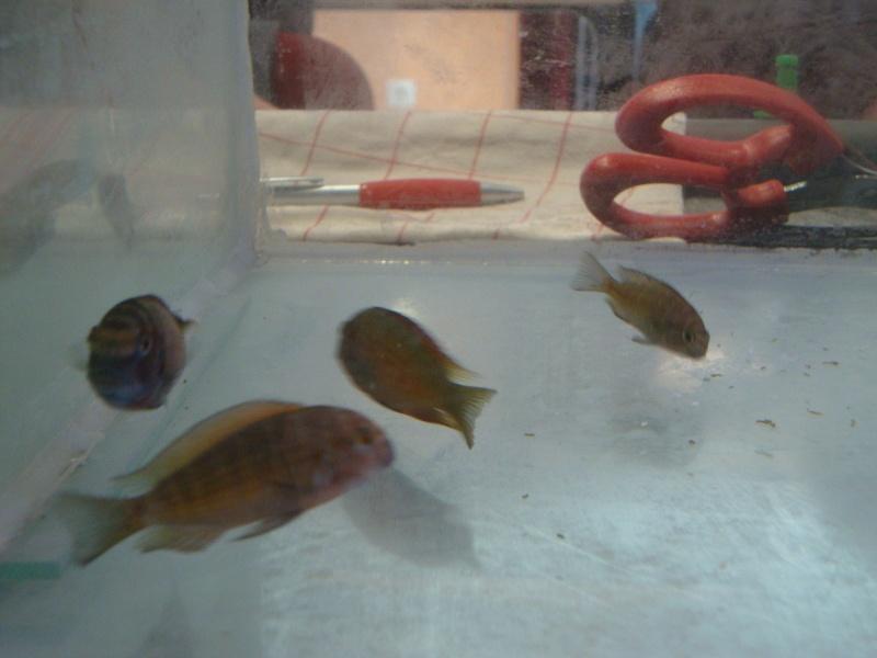 Bourse aux poissons le 10/10/2010 à Montdidier - Page 2 Dsc01539