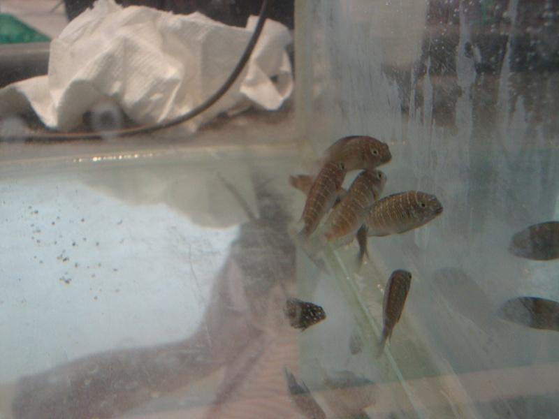 Bourse aux poissons le 10/10/2010 à Montdidier - Page 2 Dsc01541