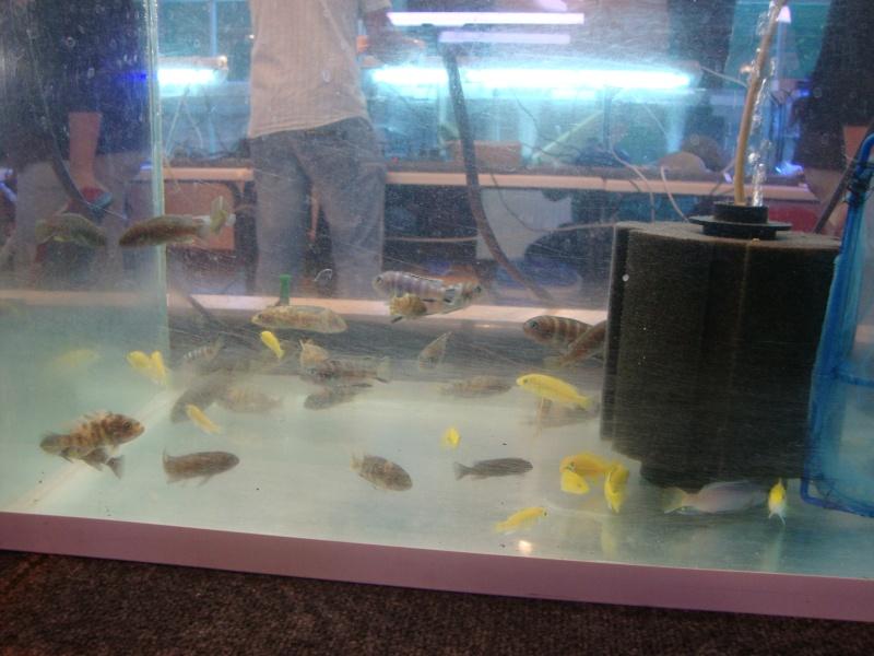 Bourse aux poissons le 10/10/2010 à Montdidier - Page 2 Dsc01613