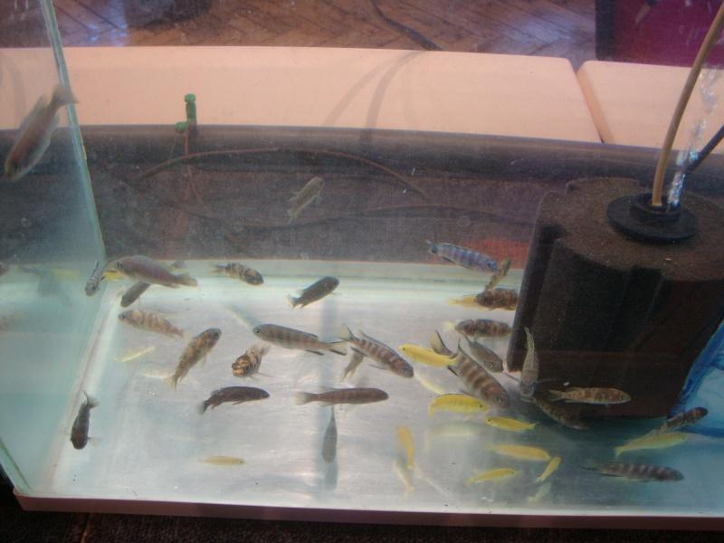 Bourse aux poissons le 10/10/2010 à Montdidier - Page 2 Dsc01614