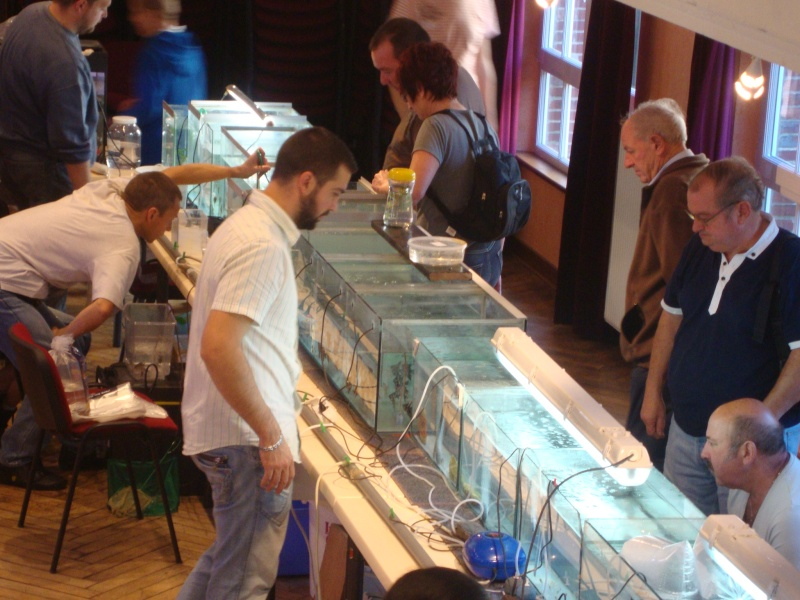 Bourse aux poissons le 10/10/2010 à Montdidier - Page 2 Dsc01618