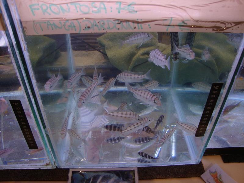 Bourse aux poissons le 10/10/2010 à Montdidier - Page 2 Dsc01620