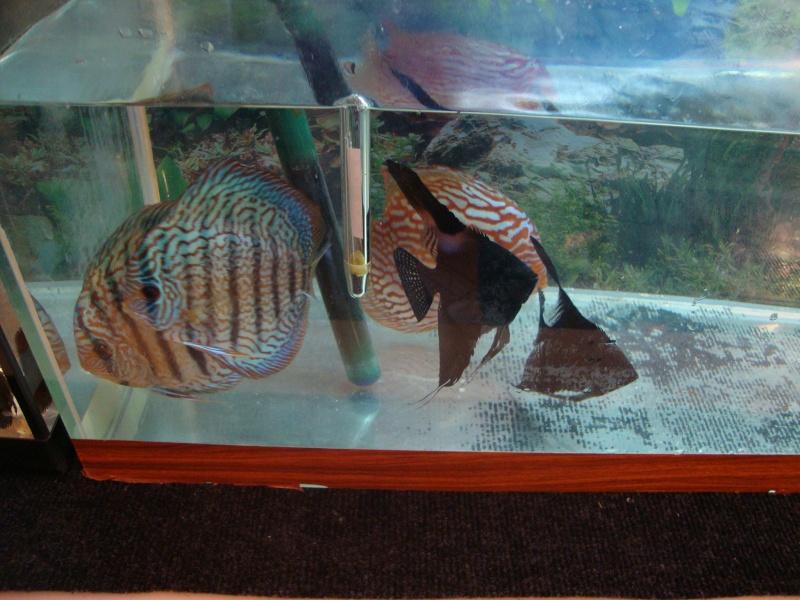 Bourse aux poissons le 10/10/2010 à Montdidier - Page 2 Dsc01621
